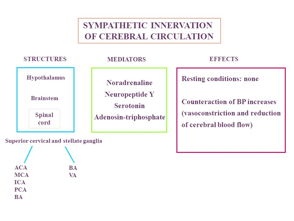 SYMPATHETIC INNERVATION OF CEREBRAL CIRCULATION