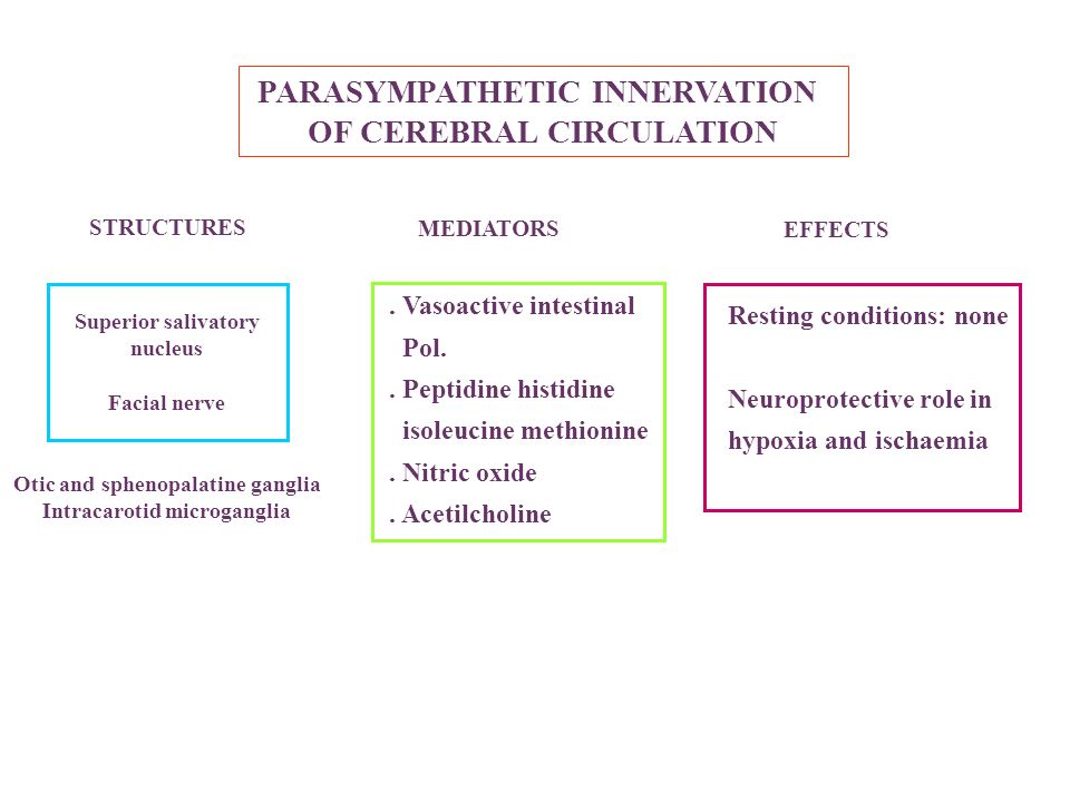PARASYMPATHETIC INNERVATION OF CEREBRAL CIRCULATION