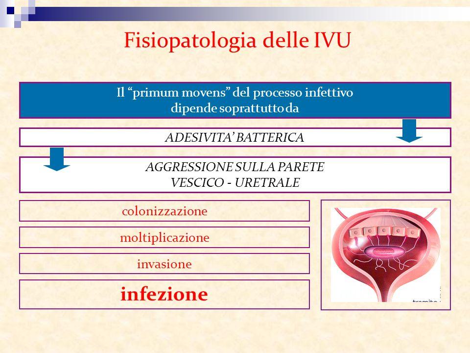 Fisiopatologia delle IVU
