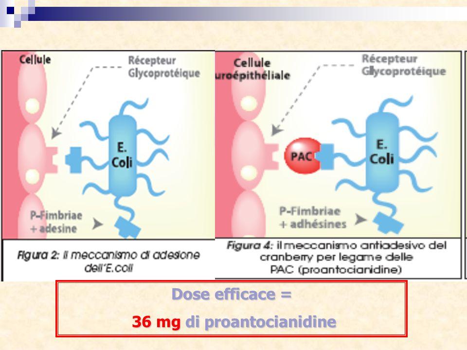 36 mg di proantocianidine