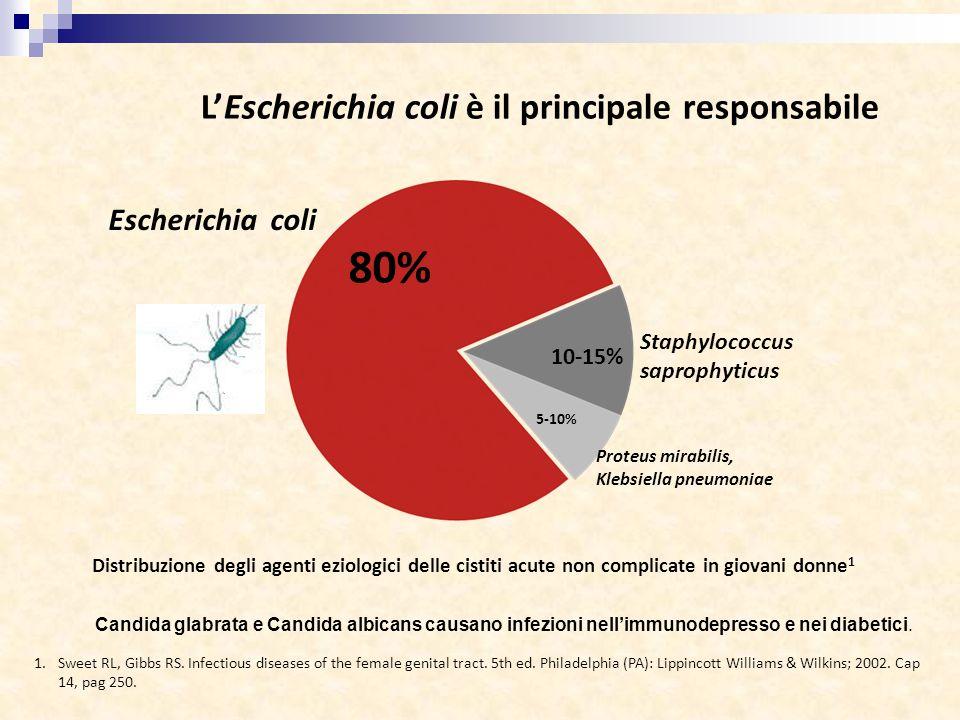 L'Escherichia coli è il principale responsabile