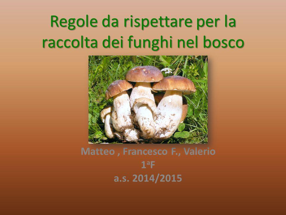 Regole da rispettare per la raccolta dei funghi nel bosco