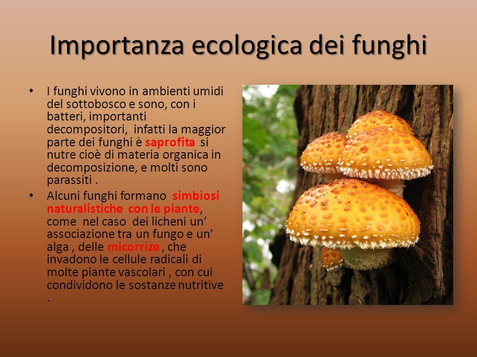 Importanza ecologica dei funghi