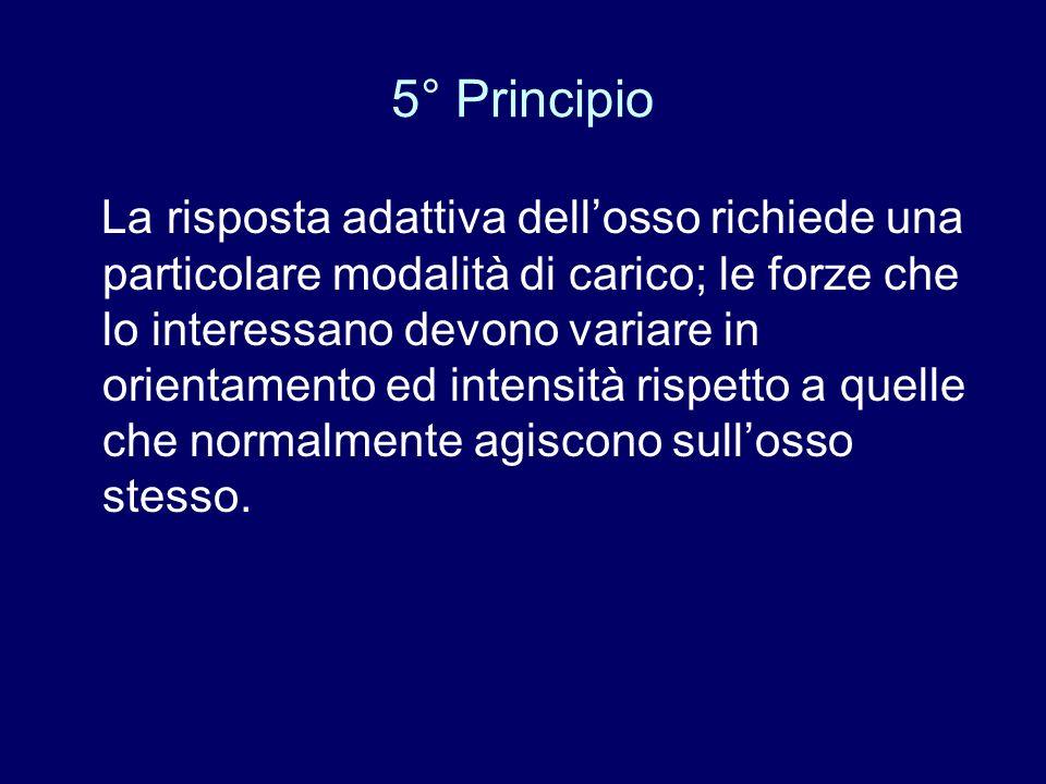 5° Principio