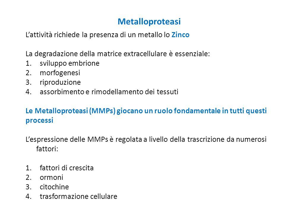 Metalloproteasi L'attività richiede la presenza di un metallo lo Zinco