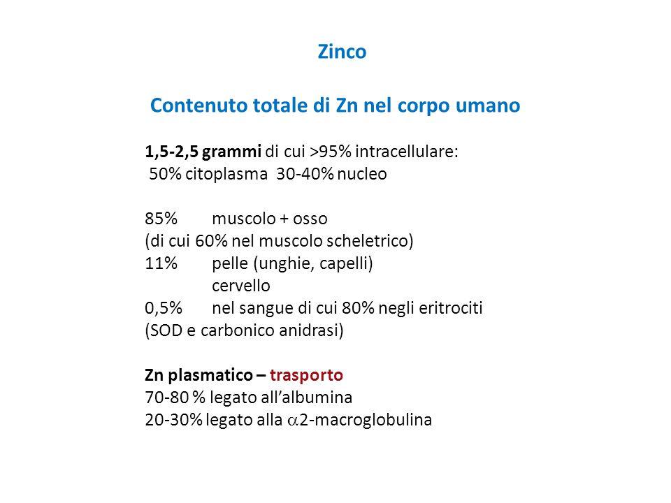 Contenuto totale di Zn nel corpo umano
