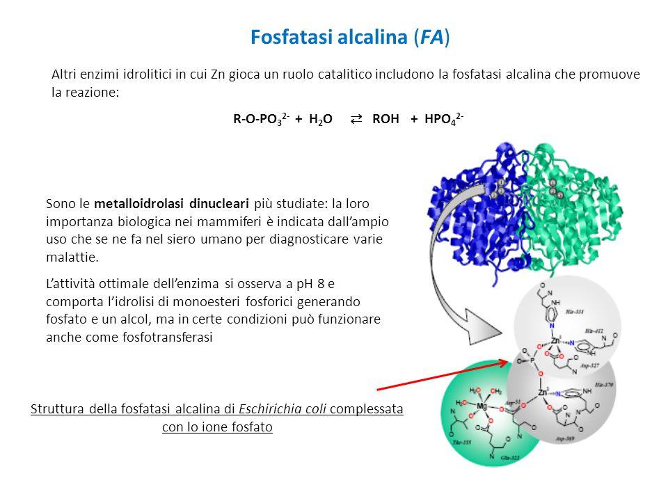 Fosfatasi alcalina (FA)