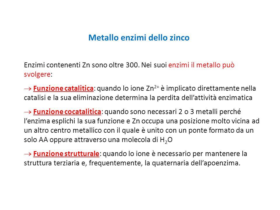 Metallo enzimi dello zinco