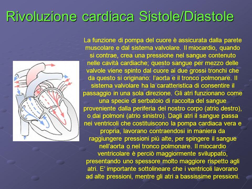 Rivoluzione cardiaca Sistole/Diastole