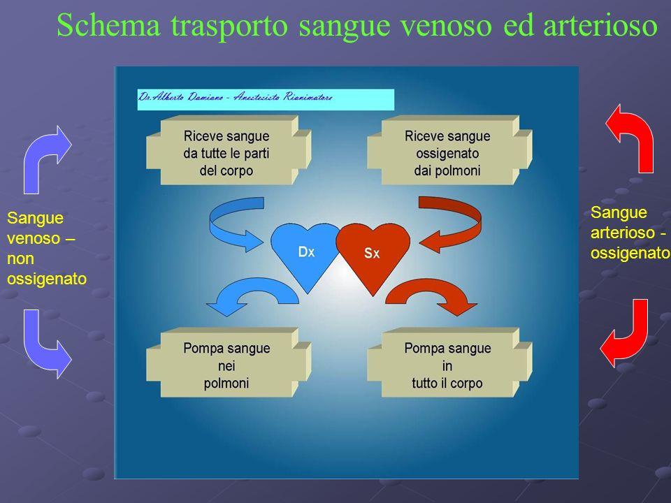 Schema trasporto sangue venoso ed arterioso
