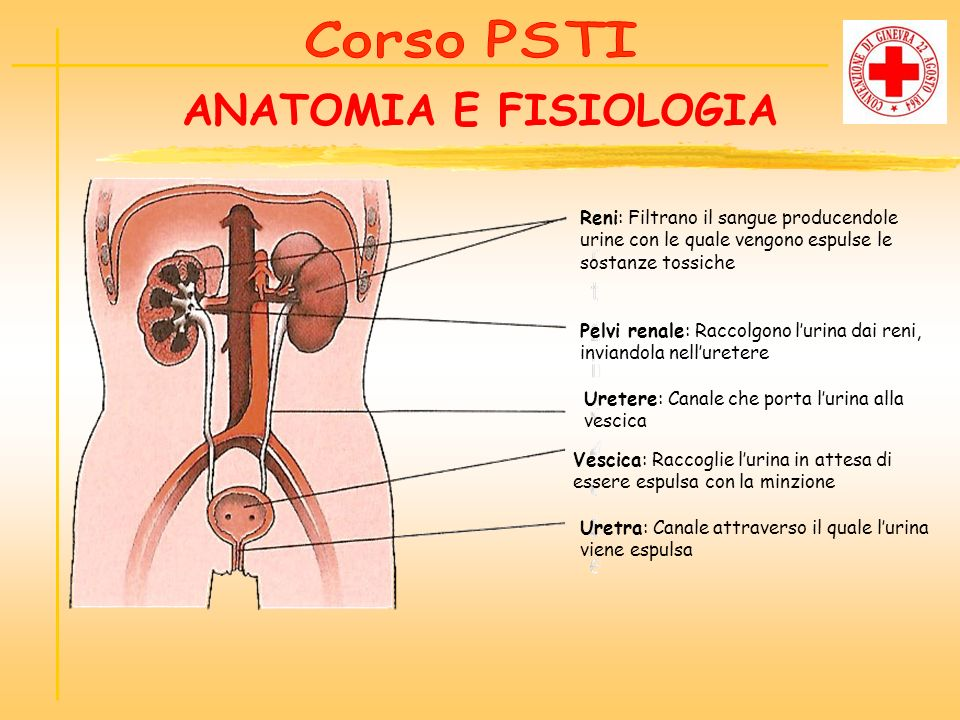 ANATOMIA E FISIOLOGIA Corso PSTI