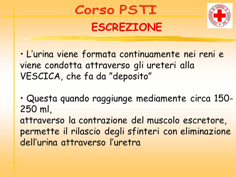 Corso PSTI ESCREZIONE. • L'urina viene formata continuamente nei reni e viene condotta attraverso gli ureteri alla VESCICA, che fa da deposito
