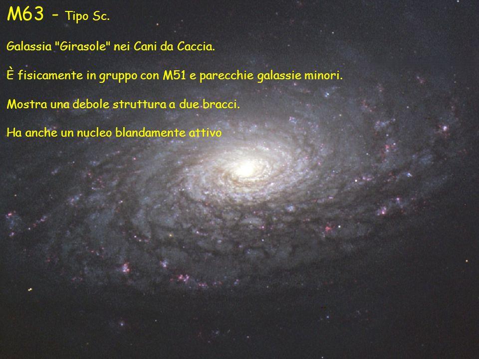 M63 - Tipo Sc. Galassia Girasole nei Cani da Caccia.