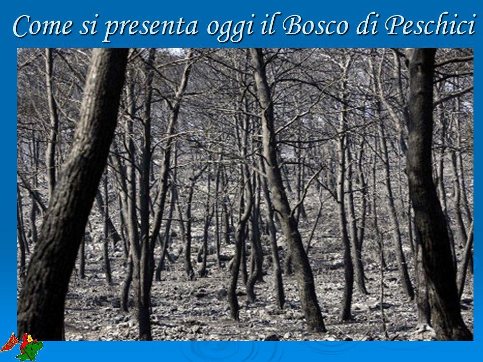 Come si presenta oggi il Bosco di Peschici