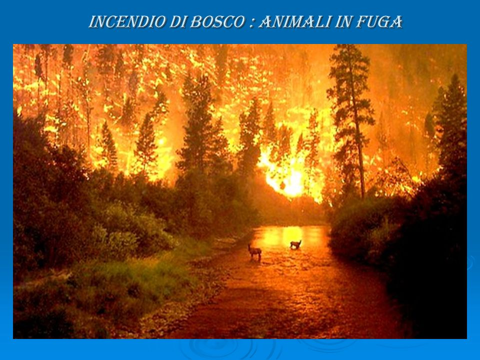 INCENDIO DI BOSCO : ANIMALI IN FUGA