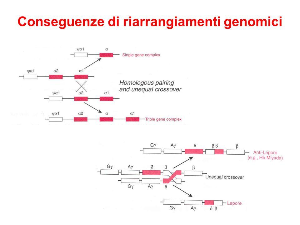 Conseguenze di riarrangiamenti genomici