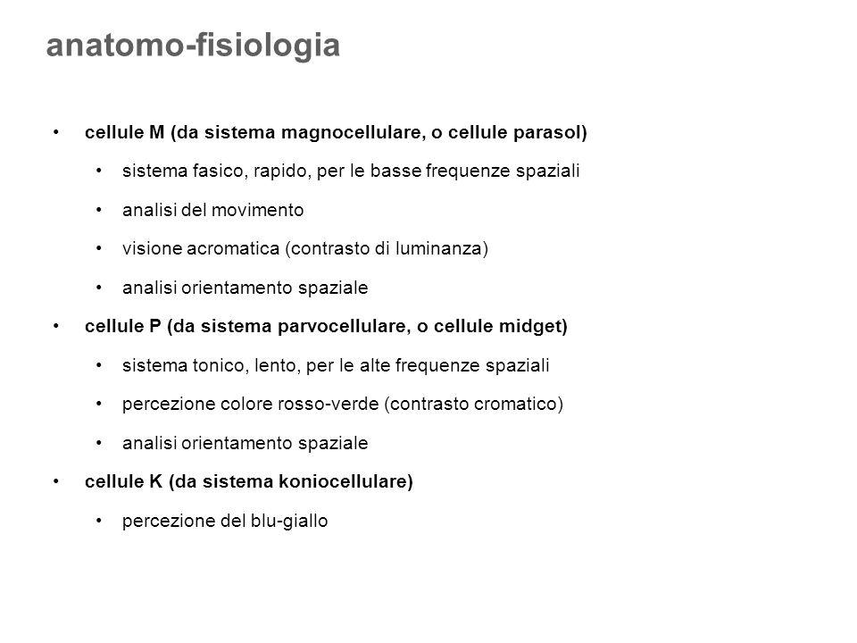 anatomo-fisiologia cellule M (da sistema magnocellulare, o cellule parasol) sistema fasico, rapido, per le basse frequenze spaziali.