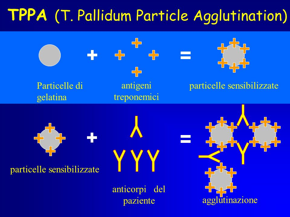 TPPA (T. Pallidum Particle Agglutination)