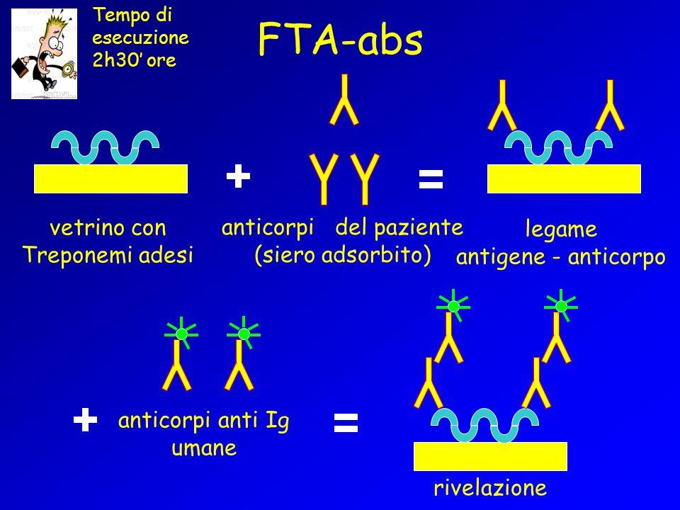 FTA-abs vetrino con Treponemi adesi anticorpi del paziente