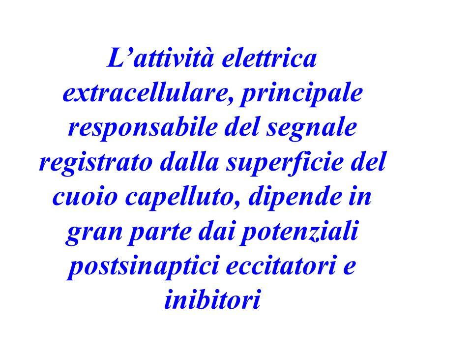 L'attività elettrica extracellulare, principale responsabile del segnale registrato dalla superficie del cuoio capelluto, dipende in gran parte dai potenziali postsinaptici eccitatori e inibitori