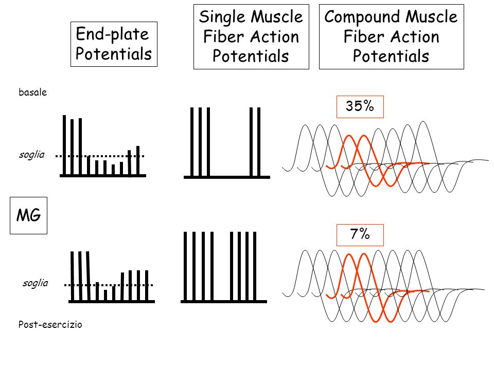Single Muscle Fiber Action Potentials Compound Muscle Fiber Action