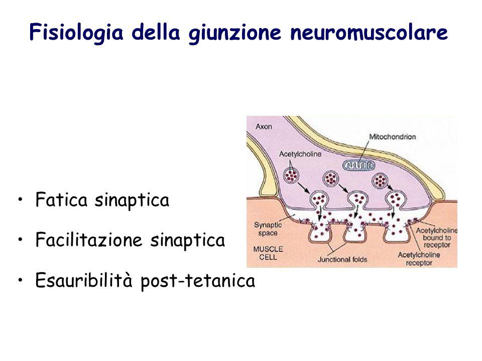Fisiologia della giunzione neuromuscolare