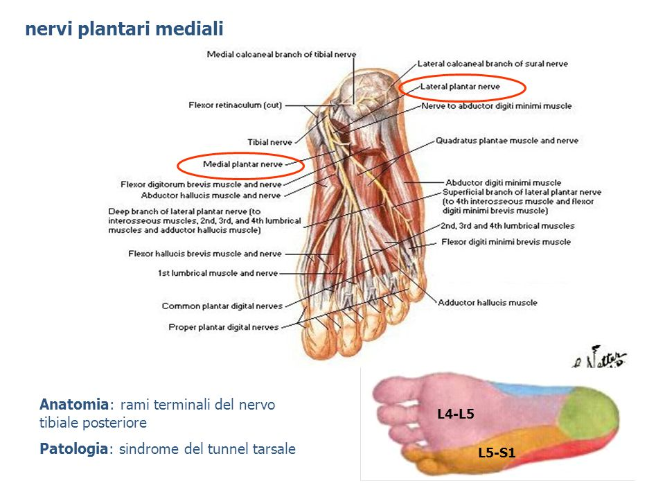 nervi plantari mediali