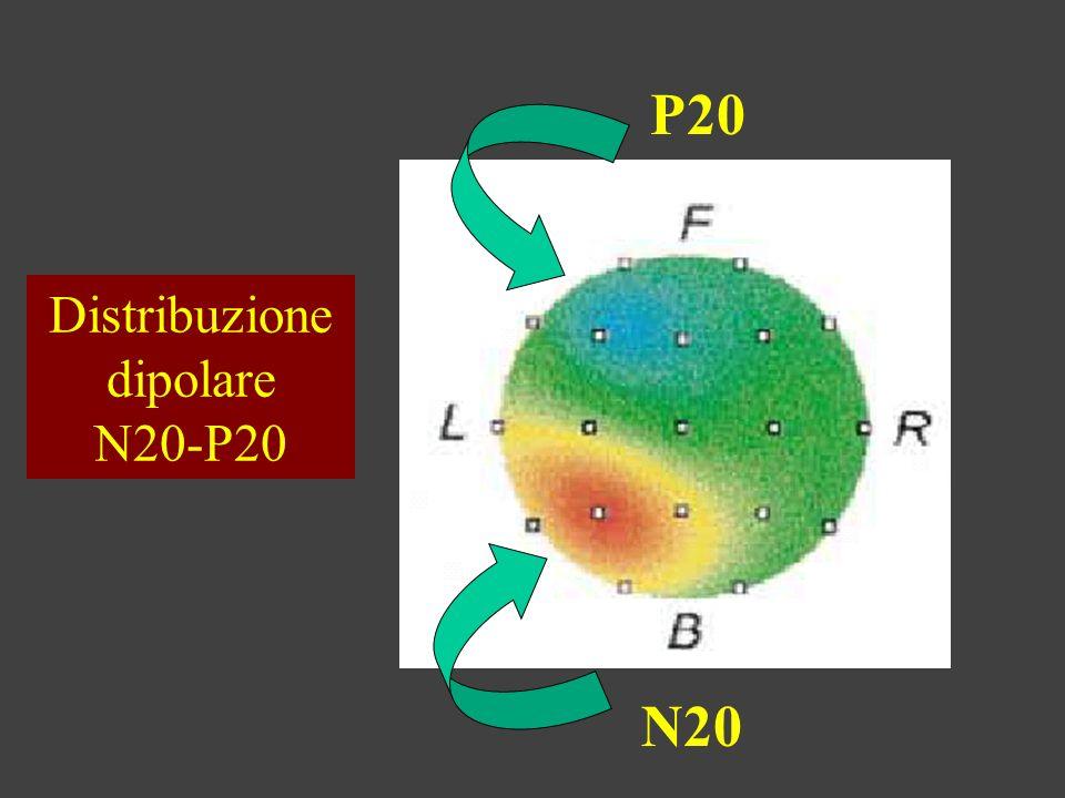 Distribuzione dipolare N20-P20