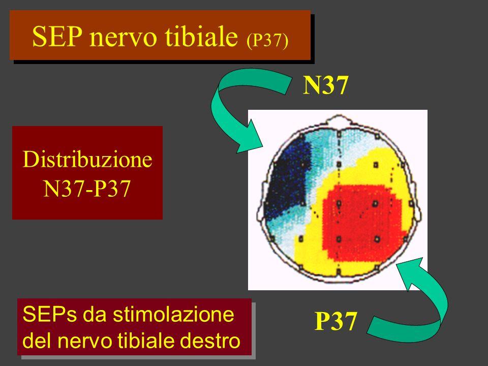 SEP nervo tibiale (P37) N37 P37 Distribuzione N37-P37