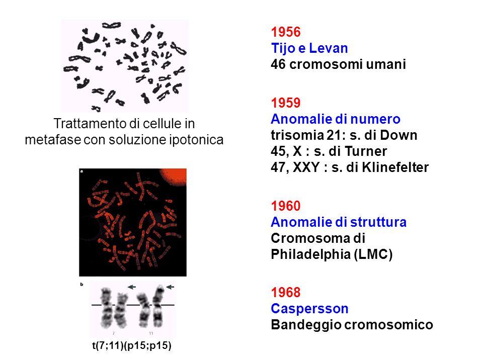 Cromosoma di Philadelphia (LMC)