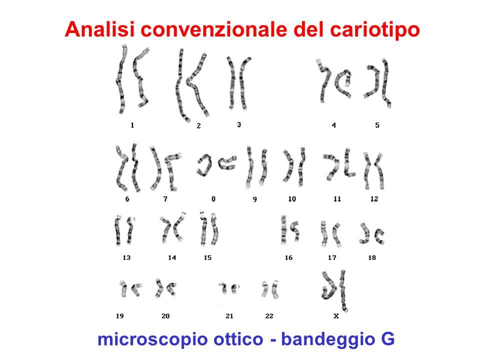 Analisi convenzionale del cariotipo