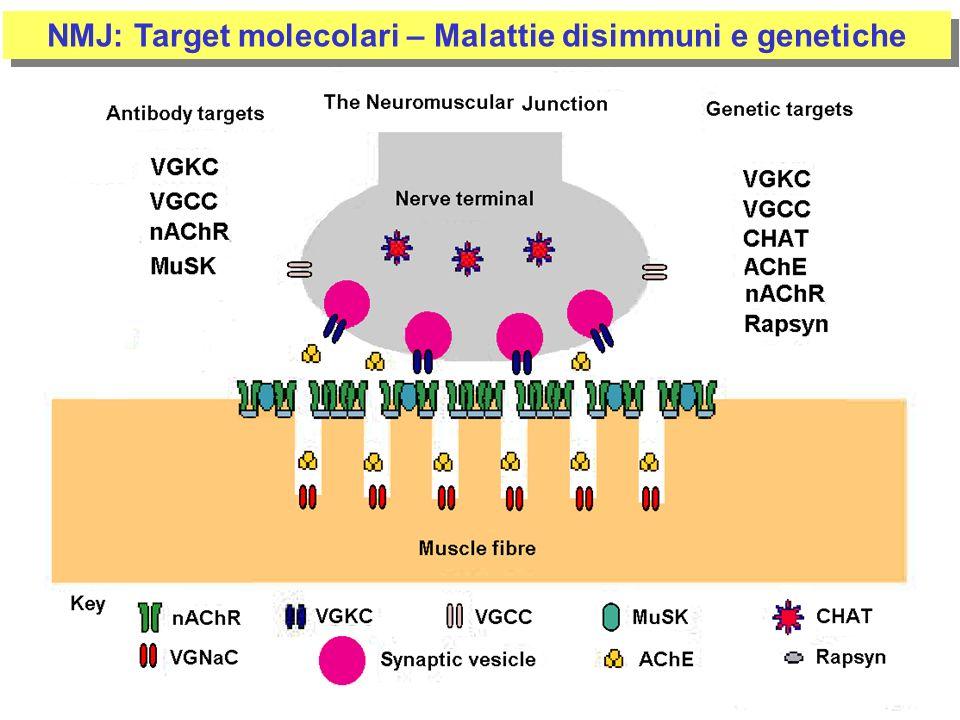 NMJ: Target molecolari – Malattie disimmuni e genetiche