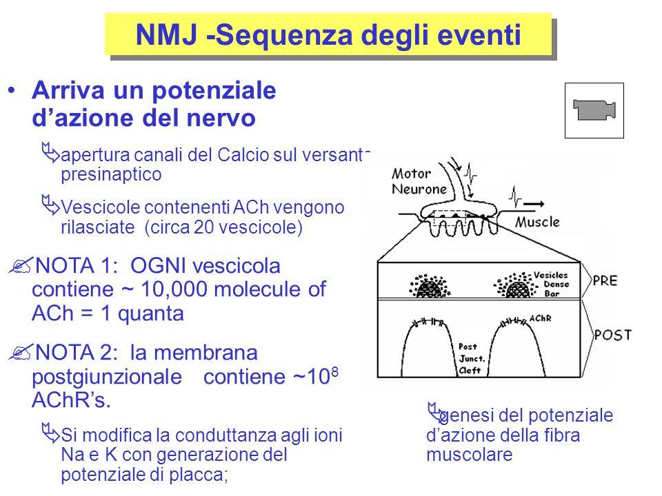 NMJ -Sequenza degli eventi