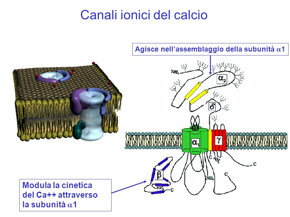 Canali ionici del calcio
