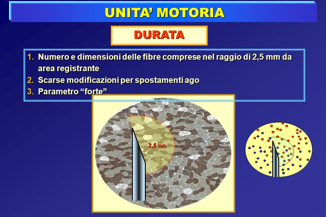 UNITA' MOTORIA DURATA. Numero e dimensioni delle fibre comprese nel raggio di 2,5 mm da area registrante.