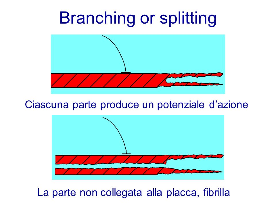 Branching or splitting