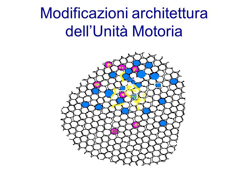 Modificazioni architettura dell'Unità Motoria