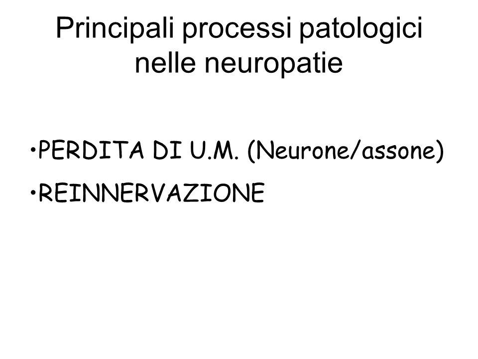 Principali processi patologici nelle neuropatie