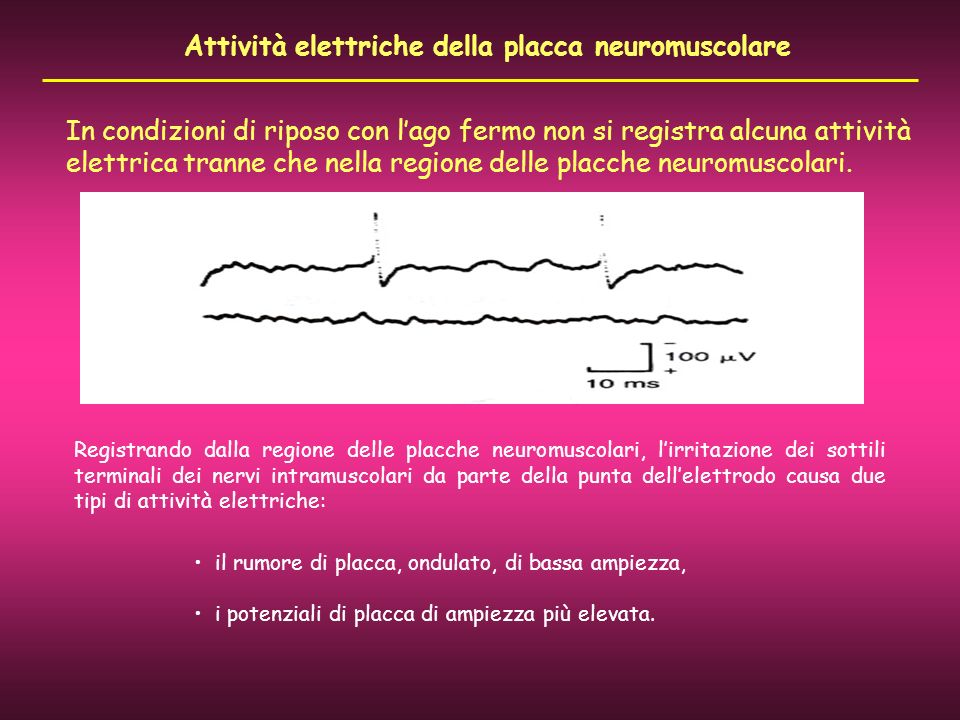 Attività elettriche della placca neuromuscolare