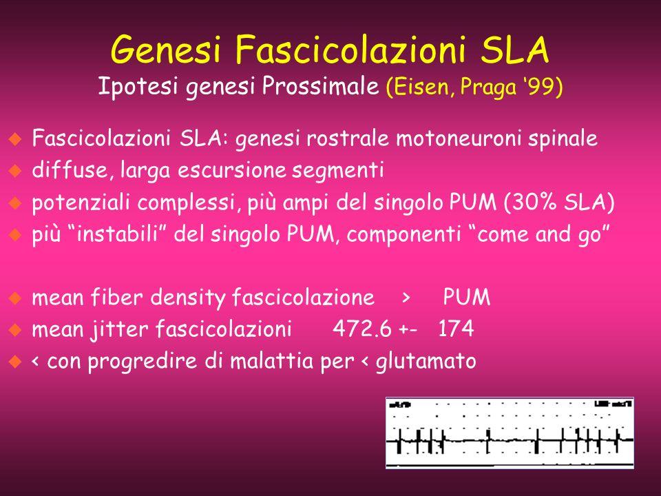 Genesi Fascicolazioni SLA Ipotesi genesi Prossimale (Eisen, Praga '99)