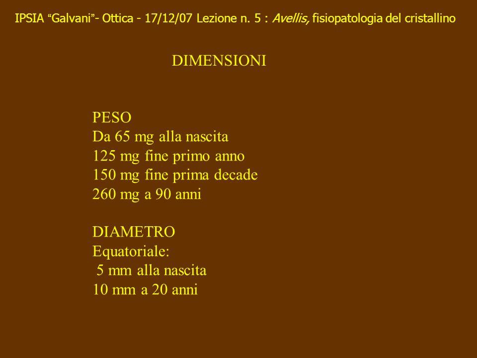 DIMENSIONI PESO Da 65 mg alla nascita 125 mg fine primo anno