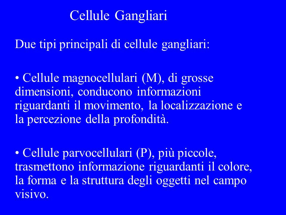 Cellule Gangliari Due tipi principali di cellule gangliari: