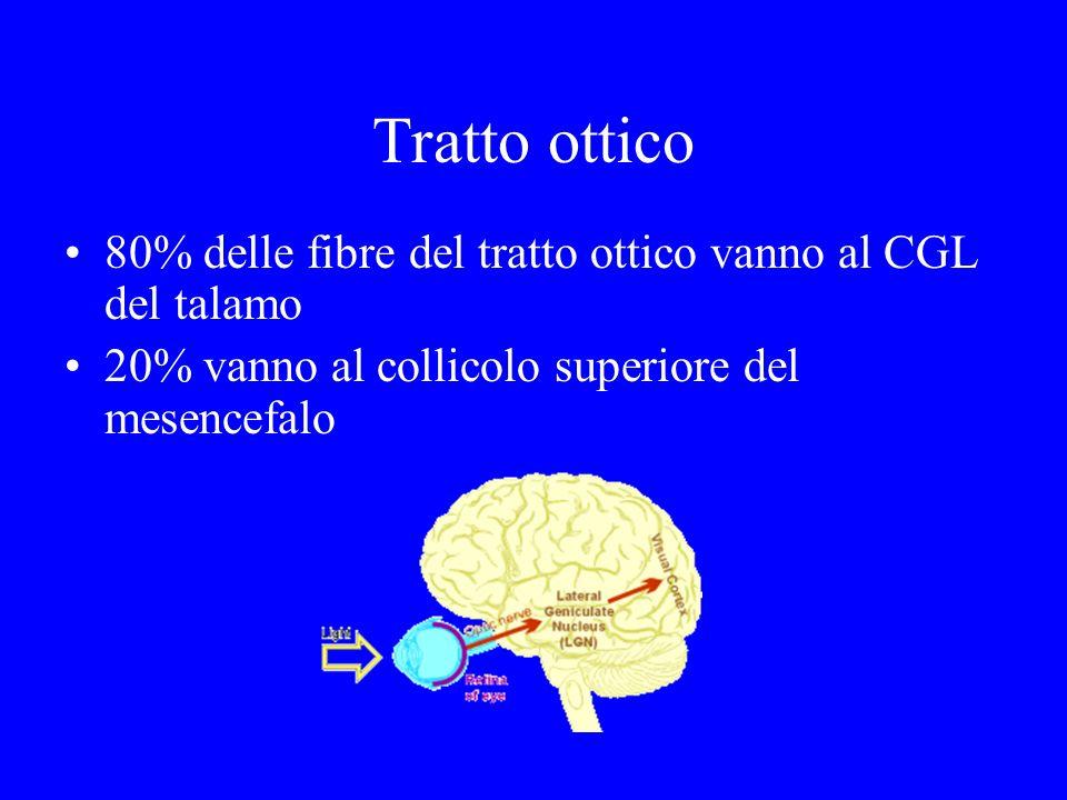 Tratto ottico 80% delle fibre del tratto ottico vanno al CGL del talamo.