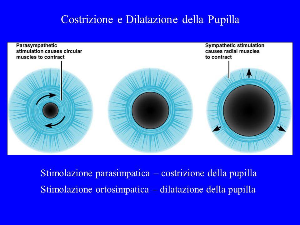 Costrizione e Dilatazione della Pupilla