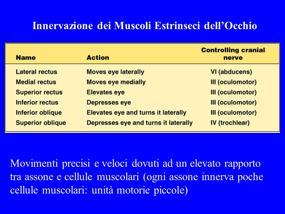 Innervazione dei Muscoli Estrinseci dell'Occhio