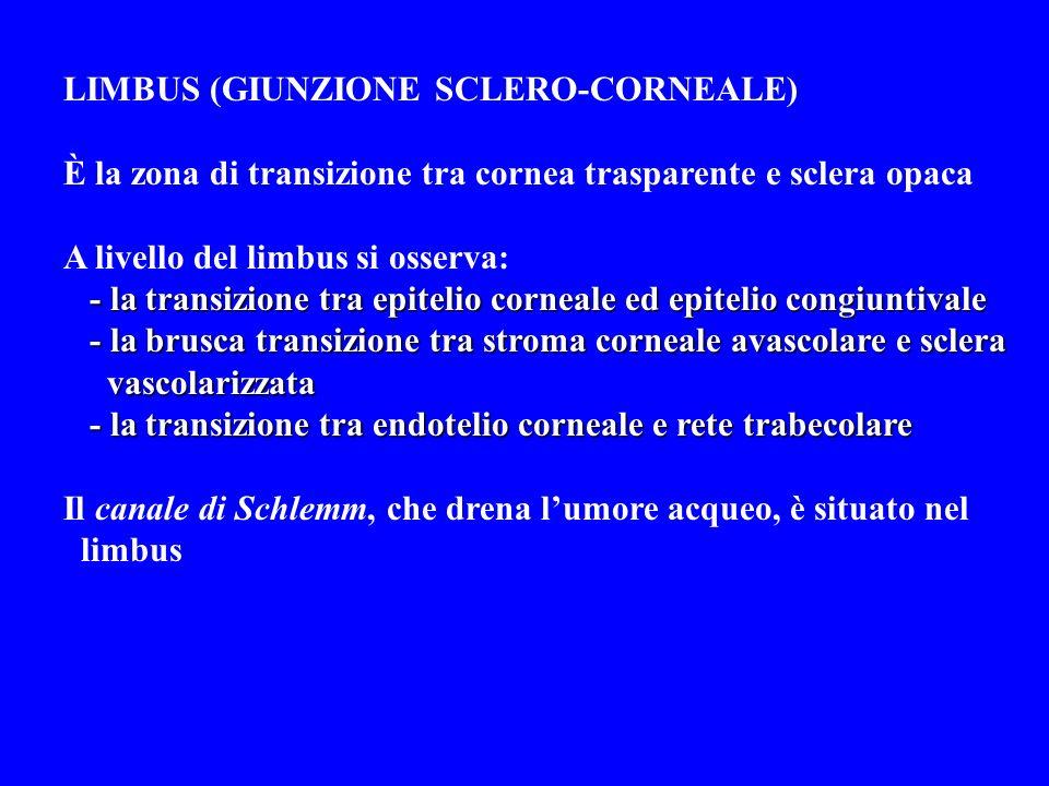 LIMBUS (GIUNZIONE SCLERO-CORNEALE)