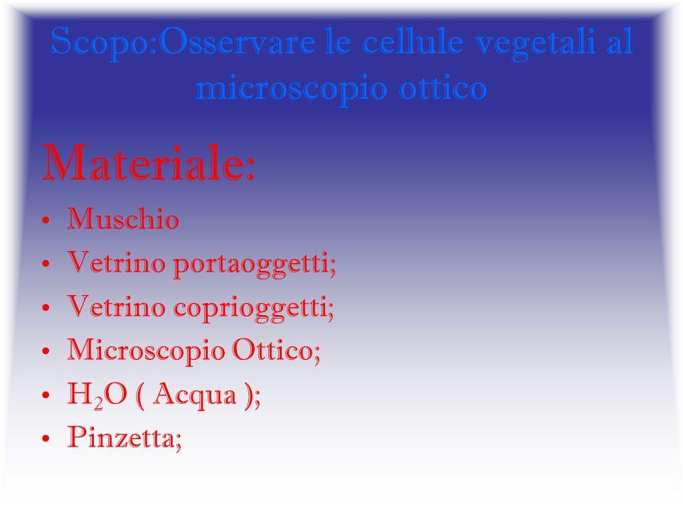 Scopo:Osservare le cellule vegetali al microscopio ottico