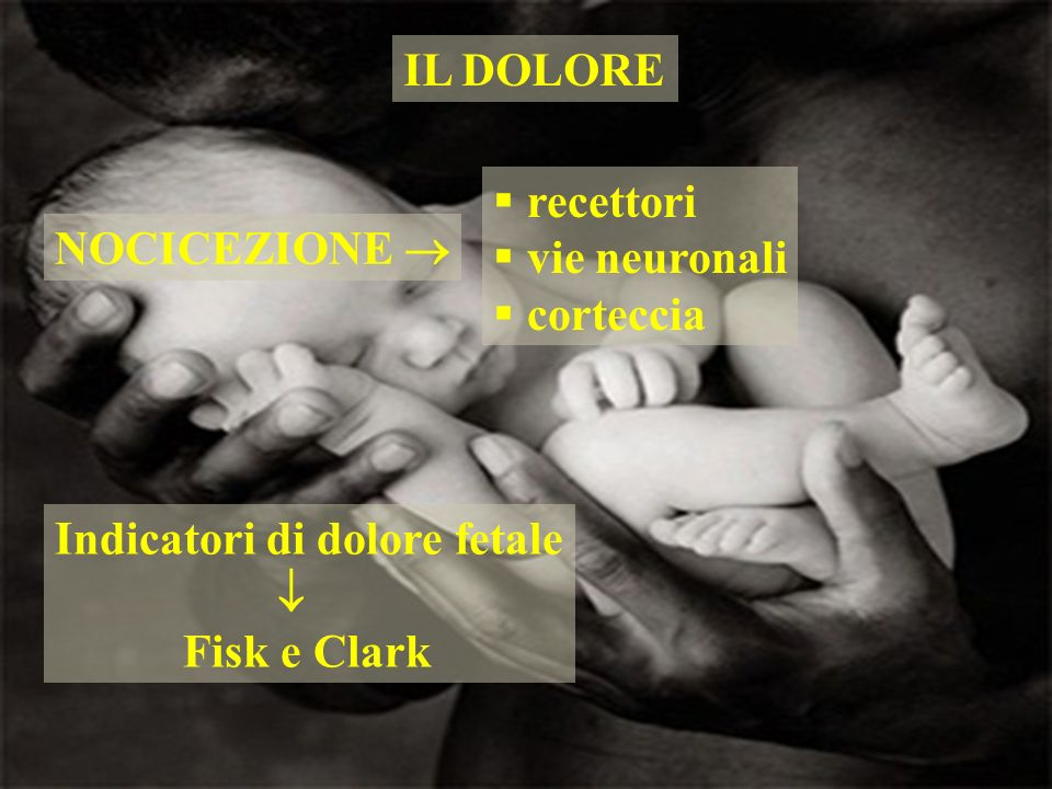 IL DOLORErecettori.vie neuronali. corteccia. NOCICEZIONE  Indicatori di dolore fetale.