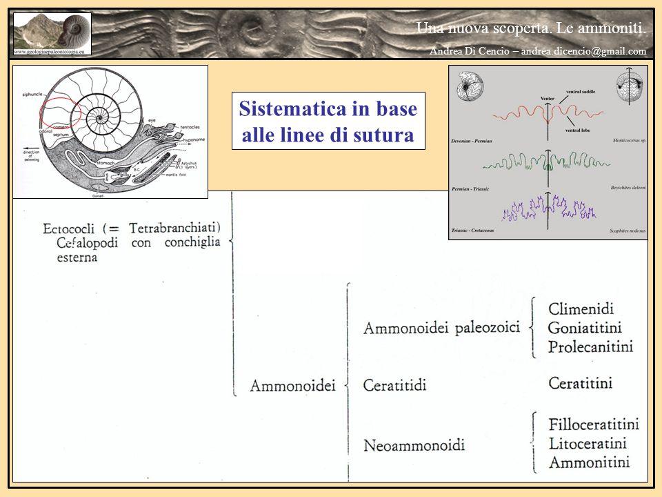 Sistematica in base alle linee di sutura