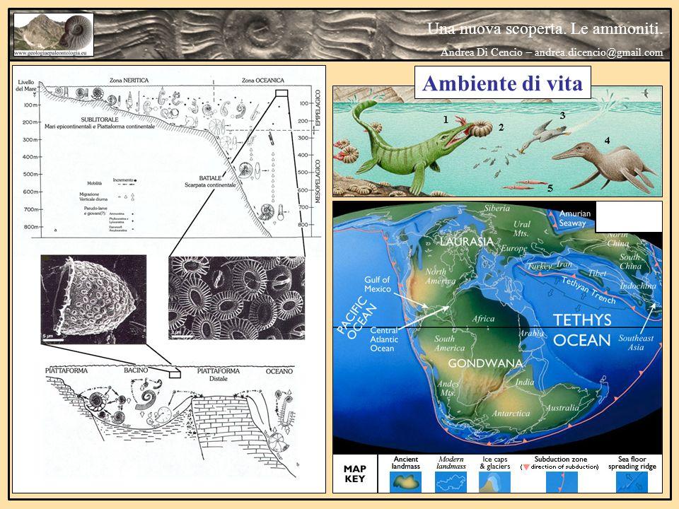 Ambiente di vita Una nuova scoperta. Le ammoniti.